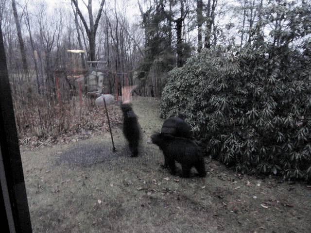 3 bears at the bird feeder December 12,2010