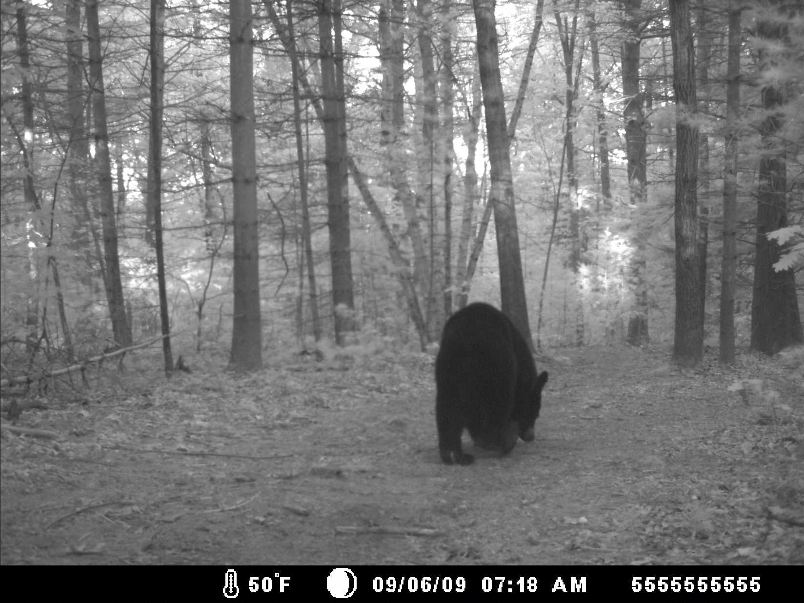 Photo of bear taken September 9, 2009, off Old Stage Road.